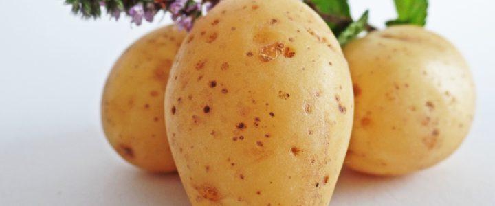 Kartoffelplanten