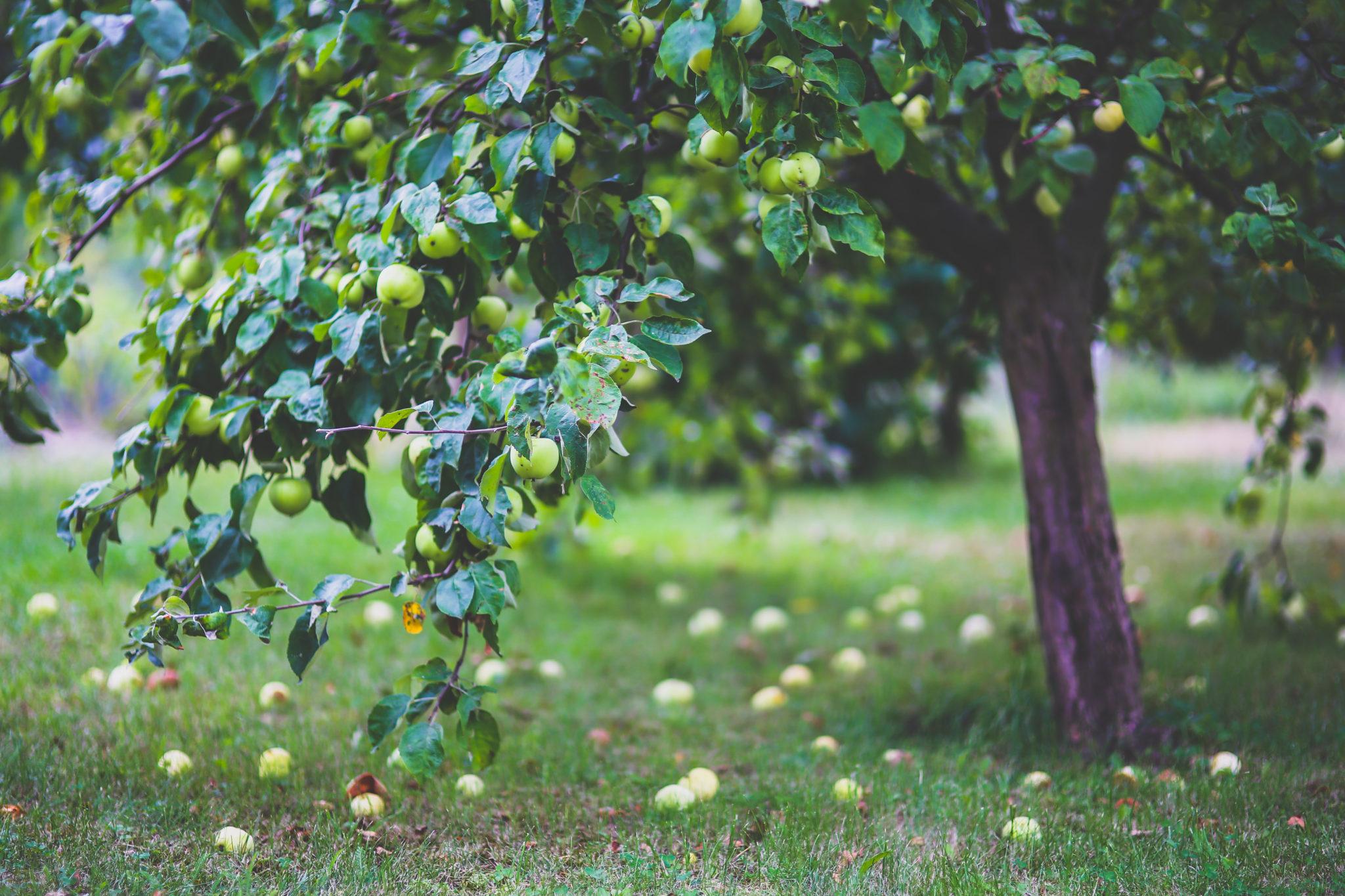 sprøjtemiddel til frugttræer