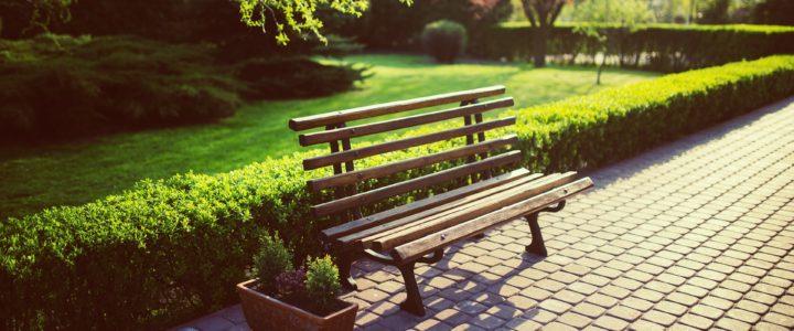 Ligusterhæk plantning: Hvornår og hvordan?