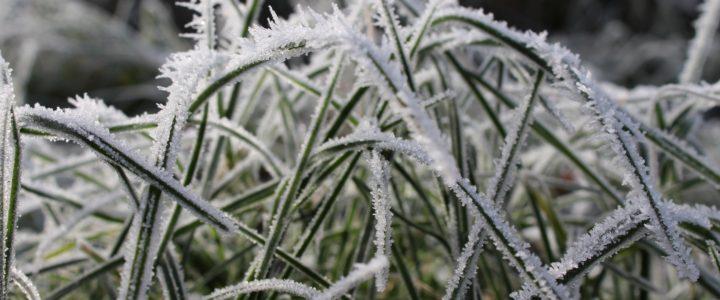 Gør haven klar til vinter