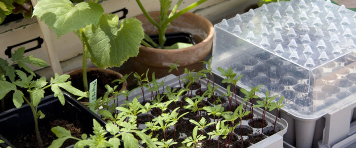 Minidrivhus – De bedste drivhuse i miniformat