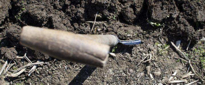 Guide: Hvornår skal man plante i haven?