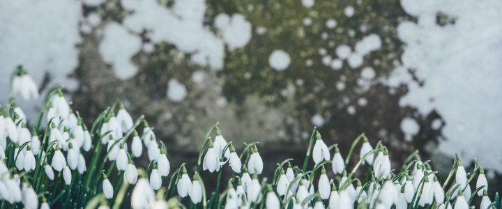 3 tips til at gøre haven forårsklar