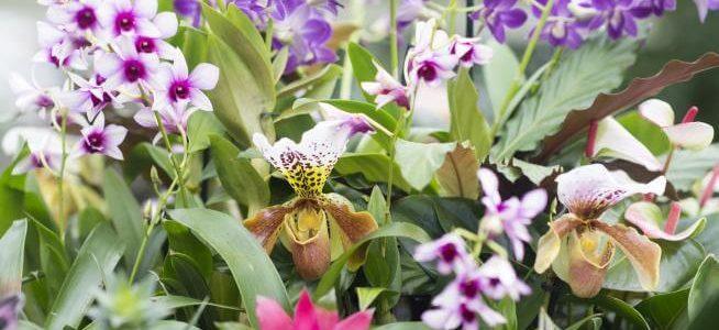 Orkideer til haven – Plantes i haven