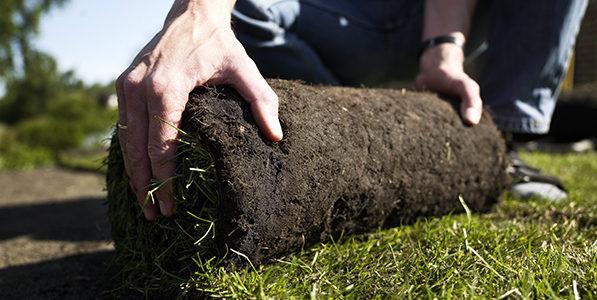 Guide til rullegræs – Hvad koster rullegræs?