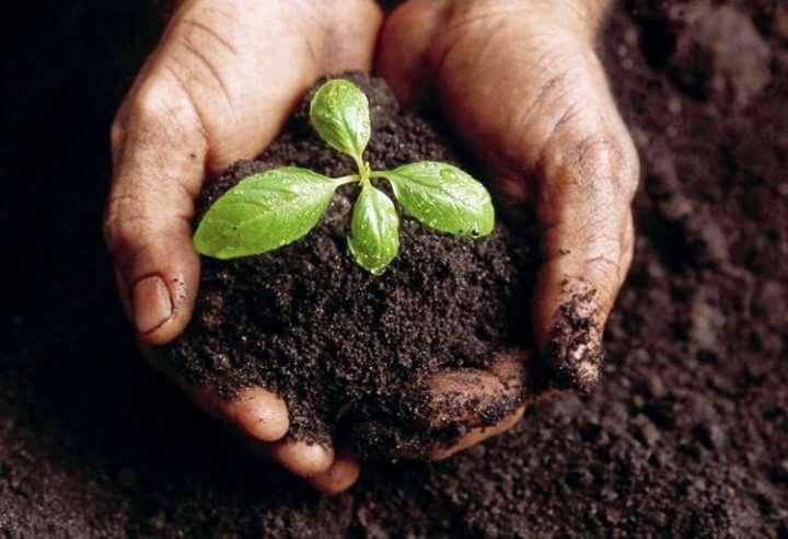 b6aba72e5 Jord til højbede | Få succes i køkkenhaven med en god højbede jord!
